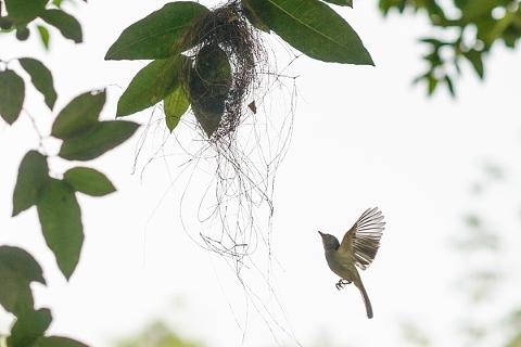 birding-01